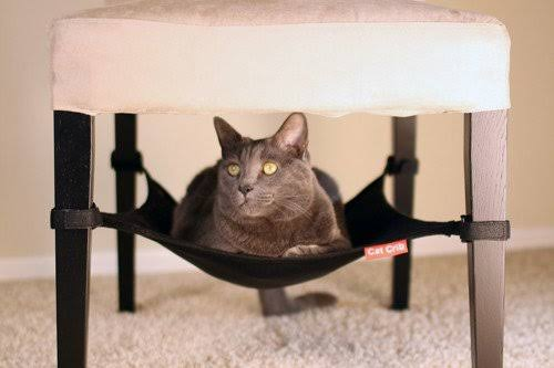 """Image result for Cat Crib Hammock Lounger gif"""""""