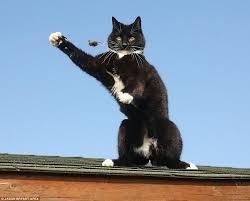 Màn bắt chuột đáng kinh ngạc của con mèo tinh ranh - Báo Pháp Luật ...