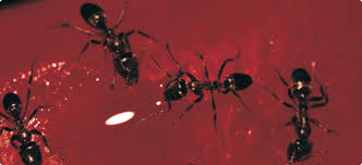 40+ Ants Pest Images