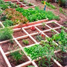 vegetables garden ideas on a budget