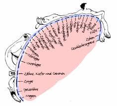 the neurocritic a new penile homunculus
