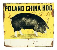 Large Vintage Metal Poland China Hog Sign | Chairish