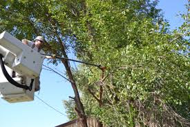 OPPD's tree-trimming policy helps reliability for all - The Wire