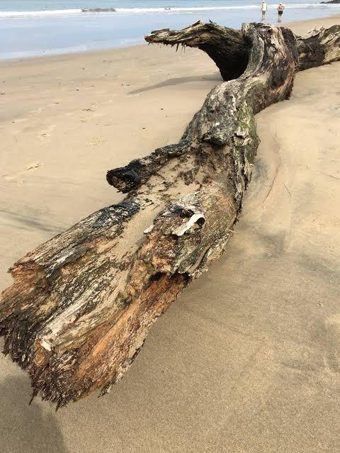 """Image result for kayu di pantai"""""""