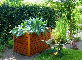 raised bed gardens and small plot