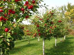 small fruit orchard small orchard