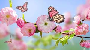اجمل الصور لفصل الربيع زهور وفراشات وأحلى خلفيات