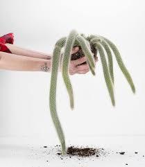 colademononis cactus monkey l