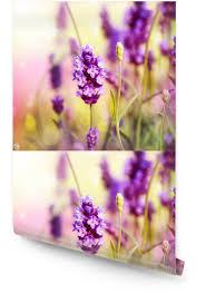 lavender field wallpaper roll pixers