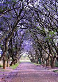 تصفح بالصور أجمل الأشجار المذهلة حول العالم ثقف نفسك