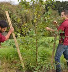 gardening big trees demand a lot of