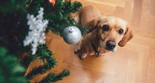 How To Dog Proof Your Christmas Tree