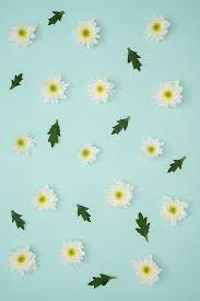hd wallpaper artificial white flowers