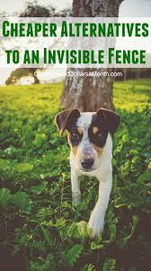 What Are The Cheaper Alternatives To Invisible Fence One Hundred Dollars A Month