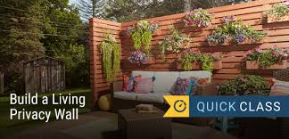 build a living privacy wall