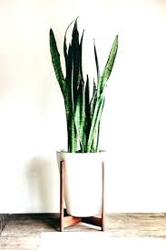 indoor ceramic flower pots winditie info