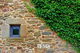 Ivy, stone wall, Monells, Baix Emporda, Catalonia, Spain, Stock Photo,  Picture And Rights Managed Image. Pic. XE1-2709067 | agefotostock