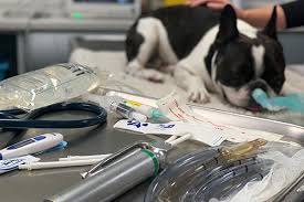 GP Refresh in Small Animal Anaesthesia