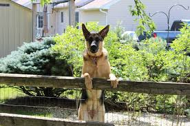 Dog Electric Fence Best Electric Dog Fences Invisible Containment Systems