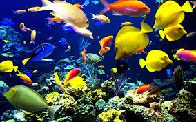 صور اسماك الزينة وأحواض السمك بتصميمات حديثة ميكساتك
