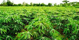 """Image result for Farmers call for access to land, single digit interest loan"""""""