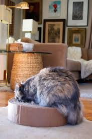 diy cat scratching post from cardboard