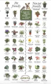 pet friendly plants and toxic plants to