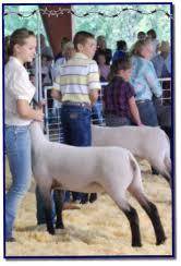 Livestock Sale