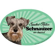 Amazon Com Prismatix Decal Schnauzer Car Magnets Spoiled Rotten Schnauzer Oval 6 X 4 Auto Truck Refrigerator Mailbox Funny Car Decals Dog Magnet Schnauzer Automotive