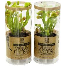 "Venus Fly Trap 3"" Flowers & Plants ..."