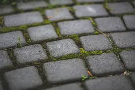 how to remove moss from concrete and