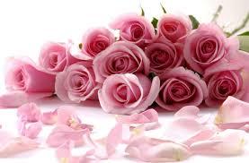 اجمل ورود في العالم ورود طبيعية مذهلة صباح الورد