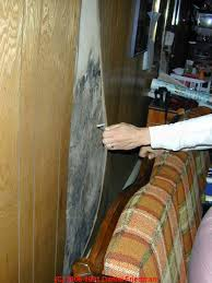 how to find mold contamination