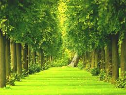 green garden wallpapers group 74