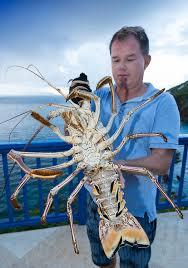 Caribbean Lobster ...