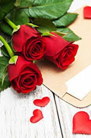 Фото День святого Валентина Сердце Розы Красный Цветы Письмо 640x960