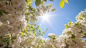 Image result for spring photos