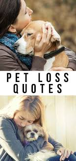 pet loss quotes to help you through the toughest of times