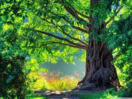 tree wallpapers top free tree