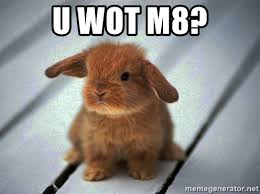 Image result for angry bunny