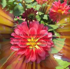 art quote quotes nature photography flower flowers happ