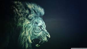 lion wallpaper hd 1080p on wallpapersafari