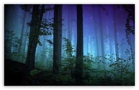 dark forest ultra hd desktop background
