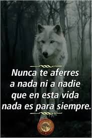 Eso es verdad  Frases motivadoras Frases de lobos Frases bonitas