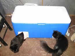 homemade cat house for winter