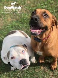 Sweet Maggie And Lucy Enjoying Their Dogwatch Hidden Fences And Training Products Facebook