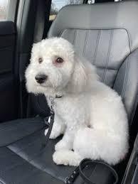 spot s pet supply dog wash 59