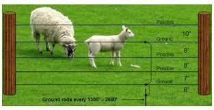 What Fencing For Sheep Animales Bovinos Cercos Ganado Ovino