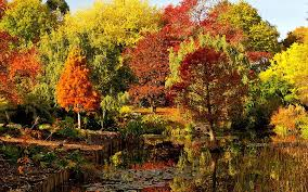 the best trees for small gardens the