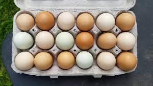 Image result for egg color